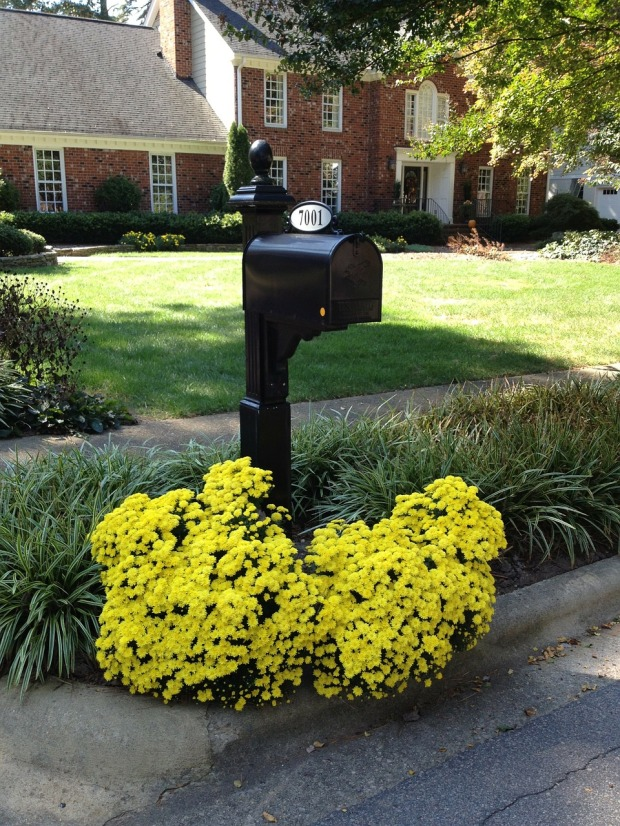mailbox ideas, flower pot mailboxes, yellow flowers, curb appeal